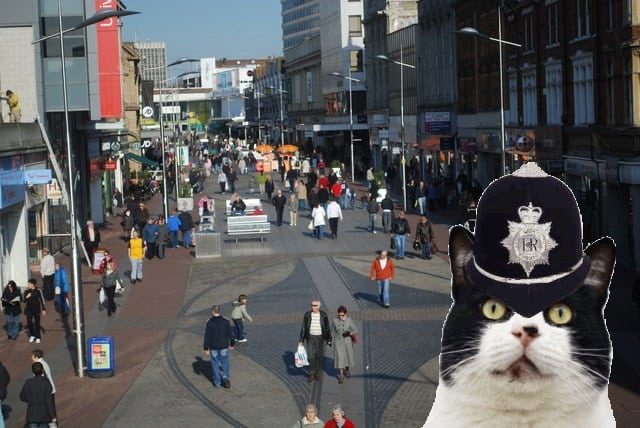PCSO cats hit the beat in Southend.