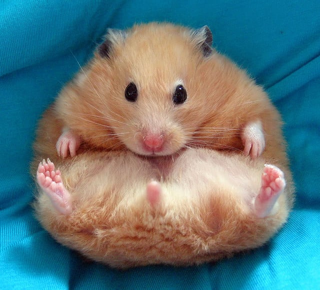Sick hamster passes away after only getting 42 likes and 3 comments on Facebook