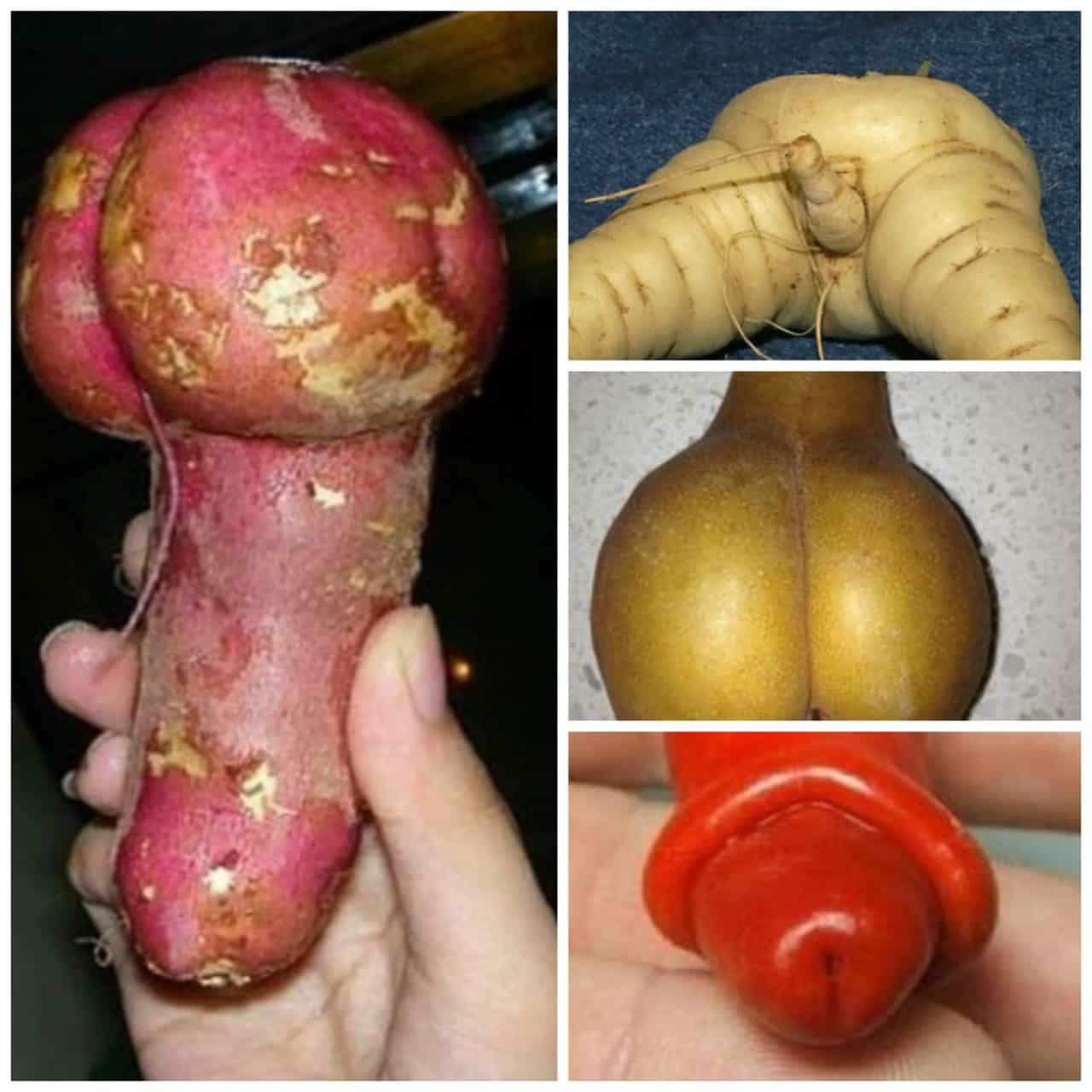 Supermarkets trial ADULT WONKY VEG BOXES to improve sex education in Essex