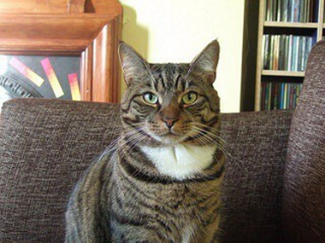 Southend residents TERRIFIED of UK's 'most aggressive' CAT