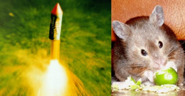 Trick or Treat horror as yobs attach family's pet hamster to a ROCKET