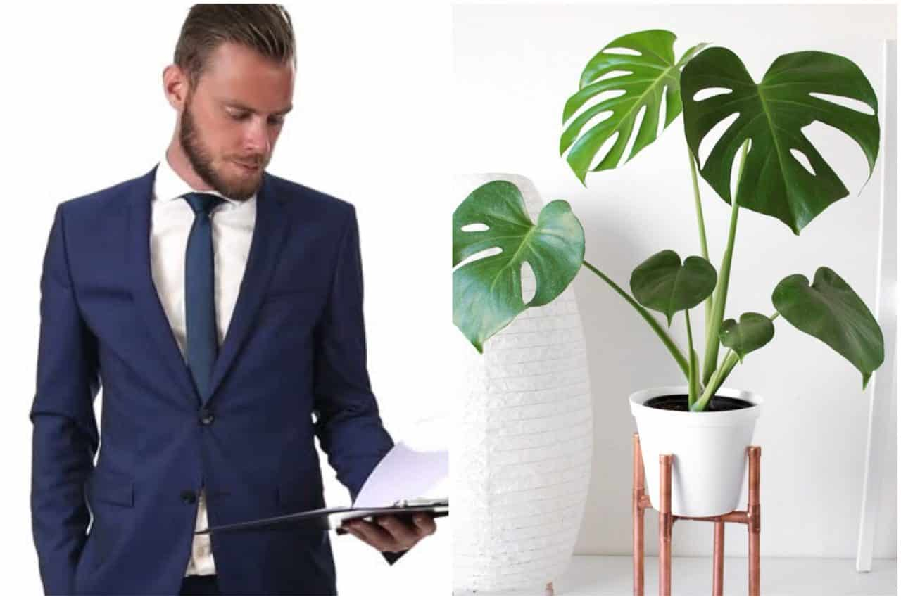 Company replaces Head of HR with nice pot plant