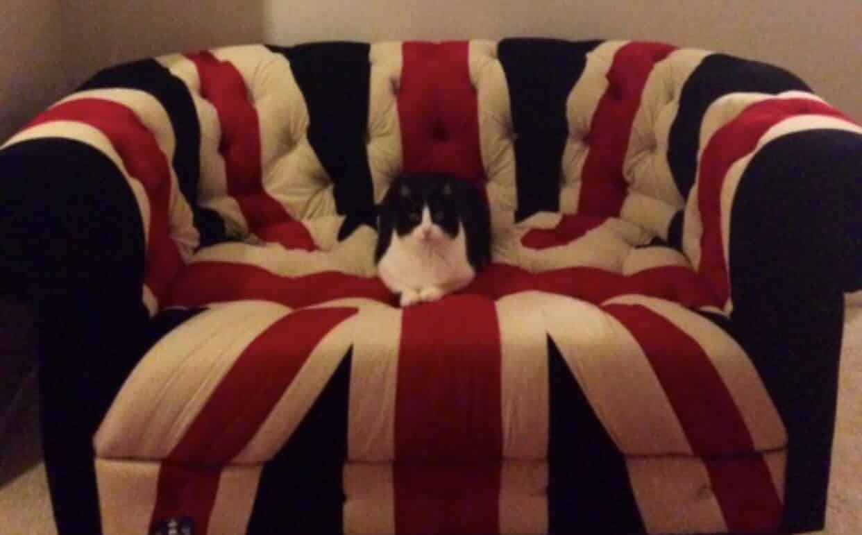 Man puts cat up for adoption for REFUSING TO WATCH QUEEN'S SPEECH